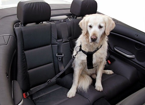 Auto Hunde-Sicherheitsgurt Gr. XS