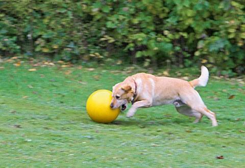 Hundespielball 30cm
