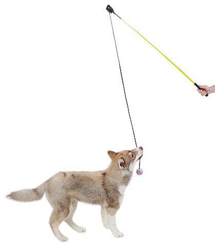 Hunde - Reizangel